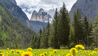 Meadow full of dandelion with breathtaking view of the Dolomites